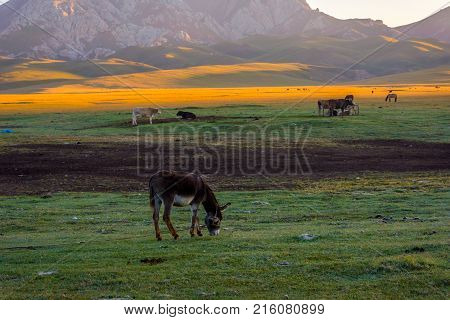 Mountains And Donkey By Song Kul, Kyrgyzstan