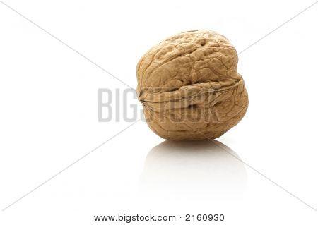 Closed Single Walnut