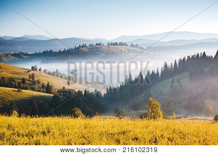 Misty alpine highlands in sunny day. Location Carpathian national park, Ukraine, Europe. Picture of wild area. Scenic image of hiking concept. Superb tourism wallpapers. Explore the beauty of earth.