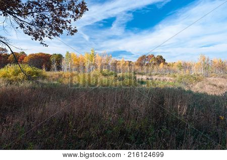 sedge meadow prairie and woodlands in autumn season at necedah wildlife refuge juneau county wisconsin