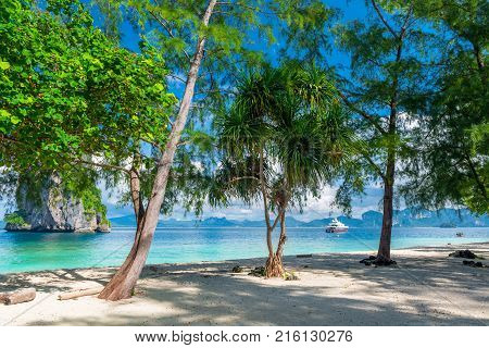 Beautiful Tree With Branchy Roots On The Background Of The Emerald Lake In Krabi, Thailand