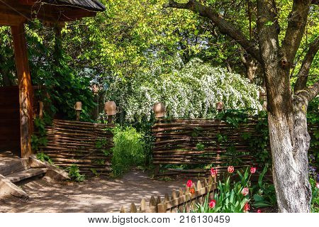 A traditional Ukrainian courtyard in the spring with an outlet to the garden and garden, with flowers in a flowerbed, a wattle fence decorated with clay pots, ivy and fruit trees.