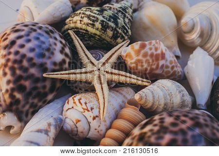 Macro view of seashell background. Starfish on seashells background. Many different seashells texture and background. Natural background and texture for designers. Seashell collection.