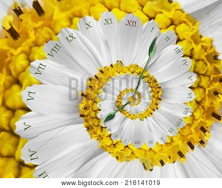 Yellow white flower clock abstract fractal spiral. Floral watch clock unusual abstract texture fractal pattern background. Surreal fashion clock roman numerals clock hands. Spiral effect fractal distorted effect