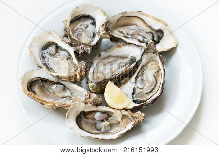 poster of Oysters. Raw fresh oysters with lemon are on white round plate, image isolated, with soft focus. Restaurant delicacy.