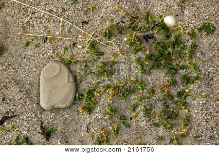 Plant Rock And Sand