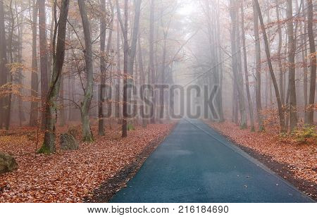 Empty asphalt road in the autumn beechwood