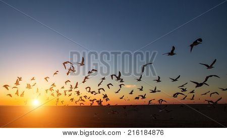 Silhouettes of flocks of gulls on the ocean beach during the amazing sunset.
