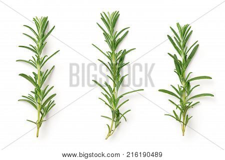Rosemary isolated on white background. Top view