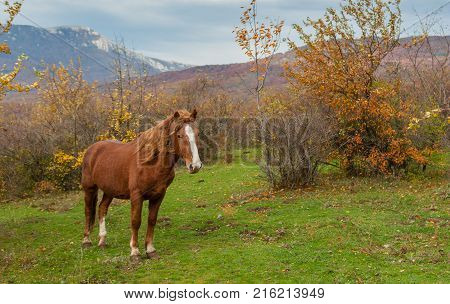 Lonely tatar horse standing on autumnal pasture located in Crimean mountains