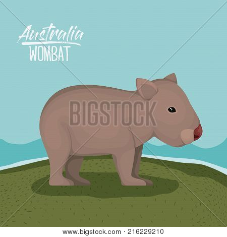 australia wombat poster with outdoor scene in colorful silhouette vector illustration