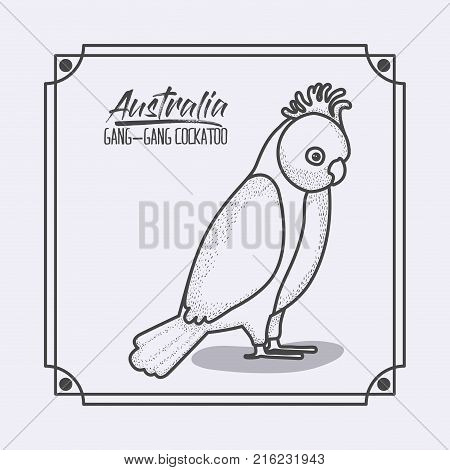 australia gang-gang cockatoo frame in monochrome silhouette vector illustration poster