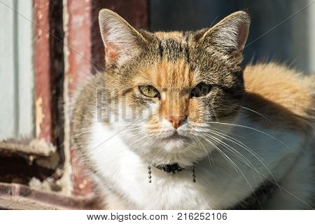 A multi-colored cat with a contemptuous look