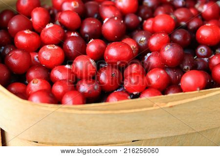 Cranberries in the basket. Background of red berries. The Spirit Of Christmas. A Christmas tradition. Ripe cranberry in the snow. The frozen berries. Snow cranberries. Berries in the snow