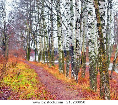 Road in park at autumn at cloud day, Russia.