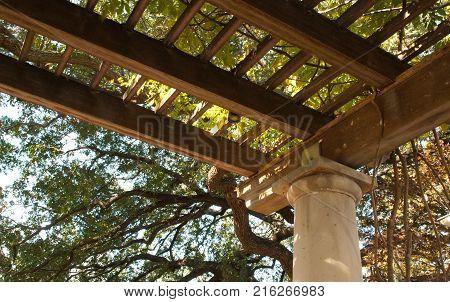 Wisteria vine on portico in autumn, trees in background