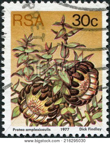 SOUTH AFRICA - CIRCA 1977: A stamp printed in South Africa (RSA), a flower bush Protea amplexicaulis, circa 1977