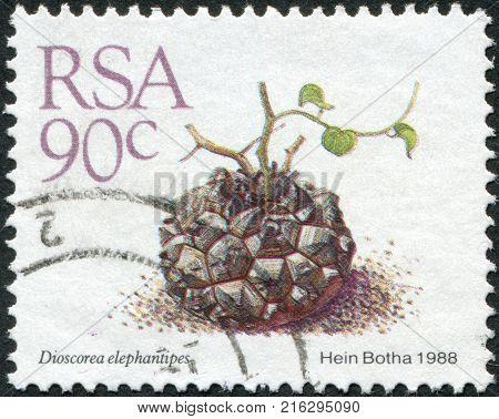 SOUTH AFRICA - CIRCA 1988: A stamp printed in South Africa (RSA), show flower Dioscorea elephantipes, circa 1988