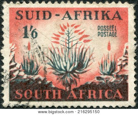 SOUTH AFRICA - CIRCA 1953: A stamp printed in South Africa, show aloe plant, circa 1953