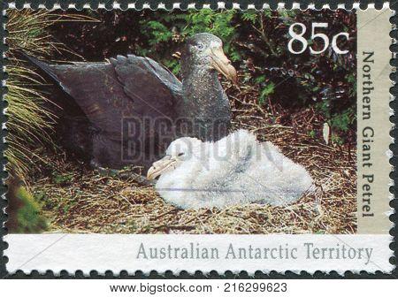 AUSTRALIA (ANTARRCTIC TERRITORY) - CIRCA 1992: A stamp printed in Australia (Antarctic Territory), shows the Northern giant petrel (Macronectes halli), circa 1992