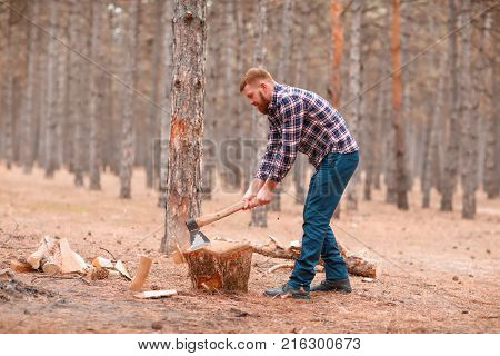 A young man is a woodcutter in a checkered shirt chopping wood in an autumn forest among the trees. Outdoors.