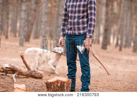 A man in a checkered shirt, a woodcutter, stands in an autumn forest among trees and holds an ax in his hand, a labrador dog running next to him. Outdoors.