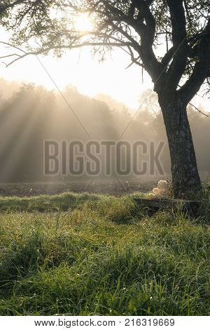 Sun rays through the mist and a plush bear - Enchanting morning in nature with a teddy bear sitting on a wooden bench under a big tree surrounded by tall grass and a forest bathed by the sun rays. poster