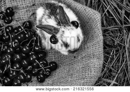 Cute Rabbit Sitting With Cherry Berries