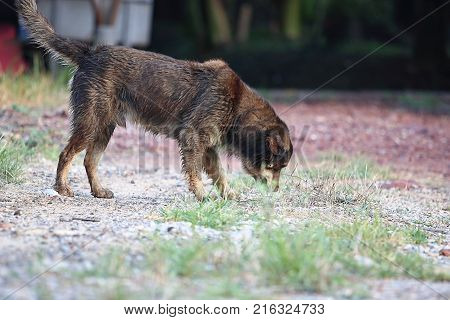 Side view of wet dog smelling on the ground at outside home.