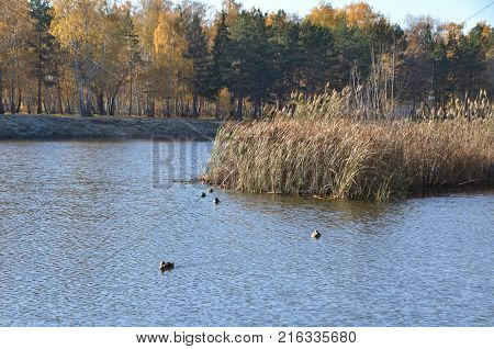 Autumn in the city park named after the 30th anniversary of the Komsomol. Omsk Siberia Russia