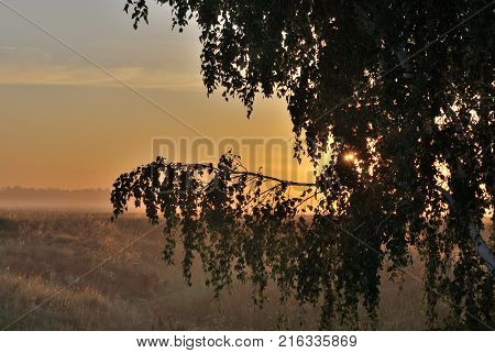 Morningg in the field Omsk region Siberia Russia