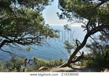 Beautiful places in the park Vorontsov Palace in the vicinity of Yalta Crimea