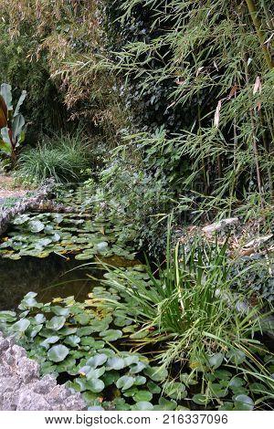 Beautiful places of the Nikitsky Botanical Garden Yalta Crimea