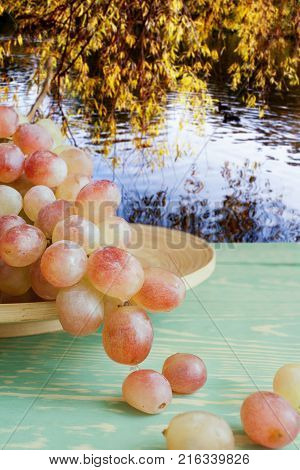 Hanging from wooden dish wet tassel of  yellow-red grapes on green wooden table against background of pond and hanging over him yellow autumn leaves.