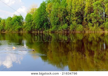 View To river bank With Spring Trees, Clouds & Afloating Log