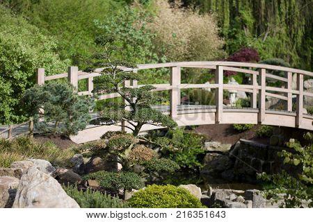 wood bridge in japanese zen garden with bonsai