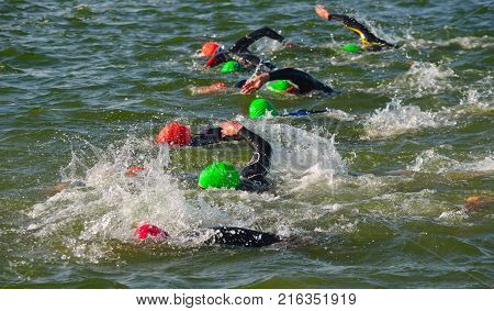 Competitors swimming in at the end of the swimming stage at the beginning of Triathlon.