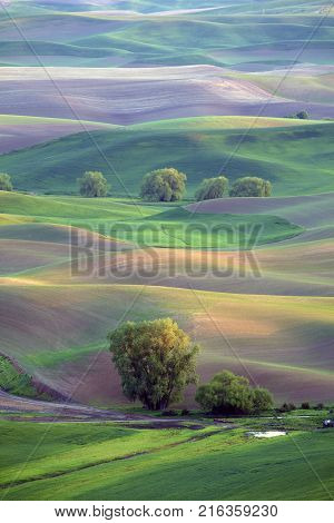 Late afternoon sun on rolling hills in the Palouse region of Washington State United States of America