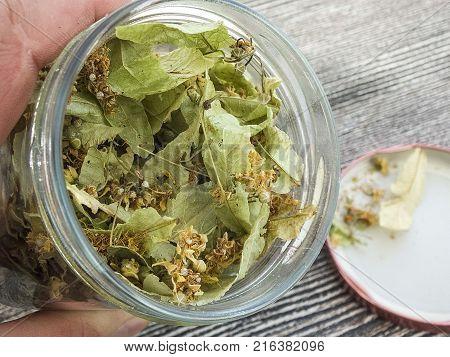linden plants in jars linden plants, linden tea and herbal benefits,