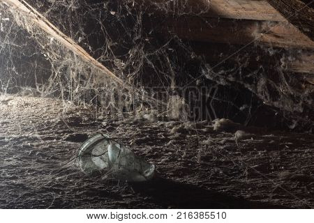 Web in the attic of the house, a unique moment, a spider.