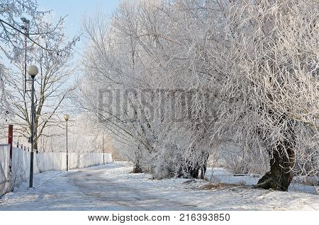 Trees beside the frozen river fence and frost.