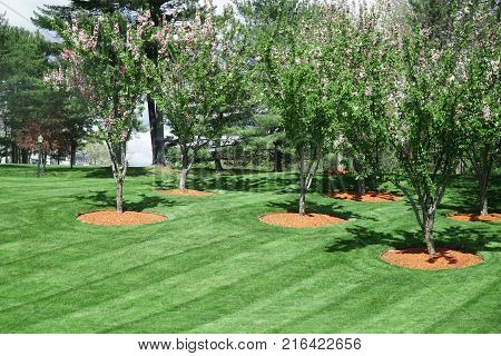 trees on green lawn, outdoor landscaping for design