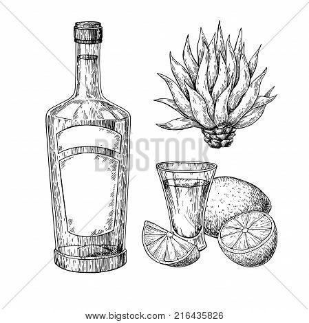 Tequila bottle, blue agave and shot glass with lime. Mexican alcohol drink vector drawing. Sketch of shot glass cocktail with citrus fruit slice. Engraved illustration for label, icon, bar or restaurant menu.