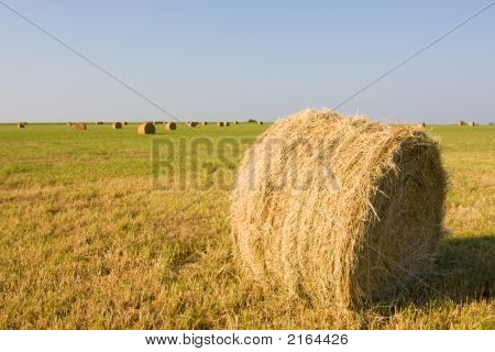 What The Hay? 2