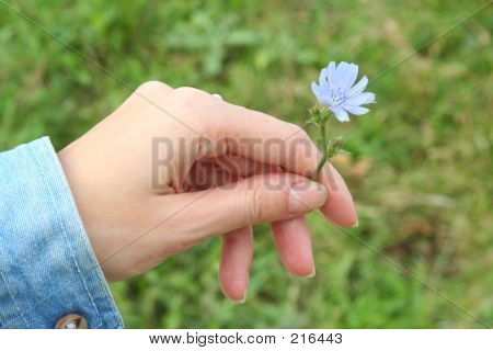 Give_blue_flower1_v1