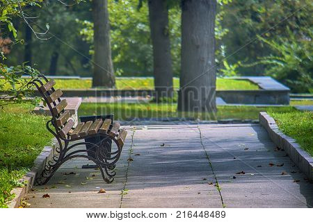 A wooden bench in the park against a background of yellow fallen leaves lie on the ground in autumn.