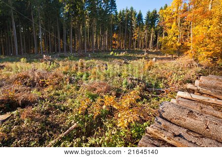 Clearcut Timber and Logpile