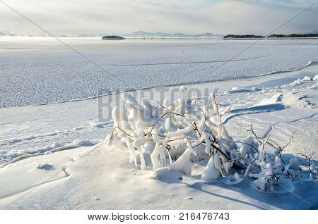 Closeup of icicles hanging from branch coated in ice from a winter ice storm. Lake Baikal
