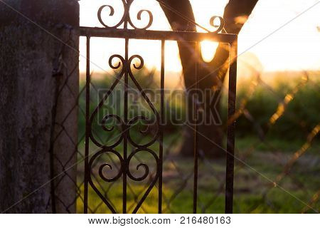 Countryside landscape. The sunset in the farm, the sunlight beams through the old gate of iron and a tree. The vegetation and trees at backlight.