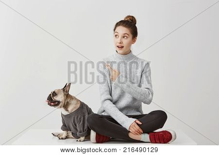 Portrait of french bulldog dressed in sweatshirt looking aside on something while pretty girl gesturing. Female photographer paying attention on curious thing. People, animal concept
